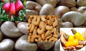 nigerian-cashewnut-4-w8ang
